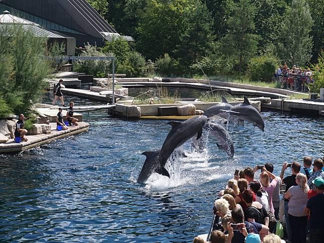 不賣了!不忍鯨豚遭圈養受苦 知名旅遊平台宣布停售海洋世界門票!